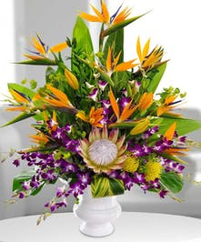 Birds of paradise stand tall in this tropical deight!