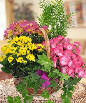 A special summertime basket containing a variety of blooming plants .