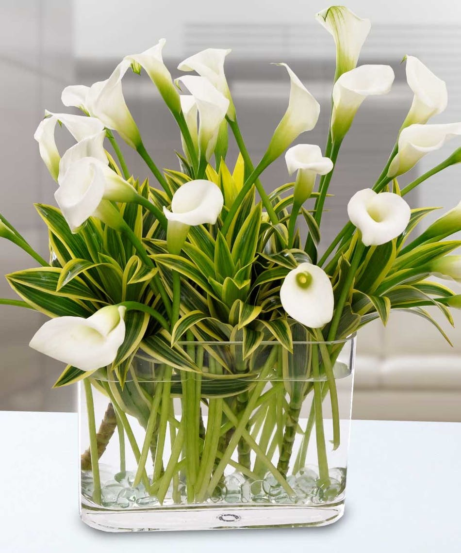 Calla lily beauty stunning statement delivered by wayne nj calla lily beauty stunning statement delivered by wayne nj florist bloslands flower shop izmirmasajfo