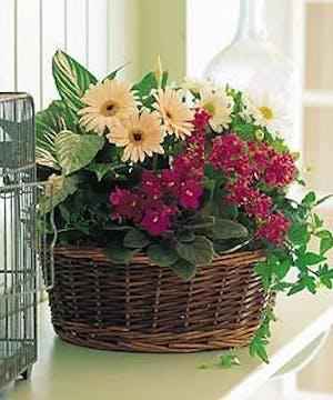 Help Grandma Start a Garden