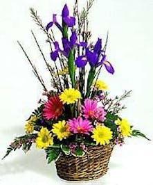 Iris Daisy Basket