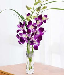 Best Value Orchids