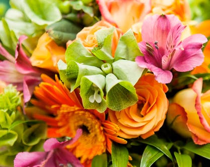 A bright mix of green, orange and pink flowers